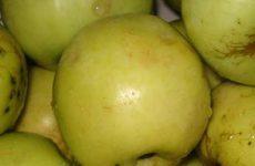 Как замариновать яблоки?