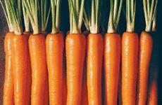 Заготовка маринованной хрустящей моркови