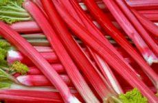 Как заготовить компот из ревеня на зиму