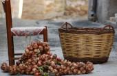 как хранить лук зимой