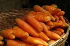 Как правильно хранить морковь зимой?