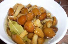 Рецепт маринованных опят от грибника