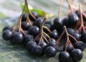 аджика из черноплодной рябины рецепт