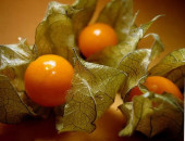 варенье из физалиса с апельсинами рецепт