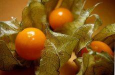 Варенье из физалиса с апельсинами