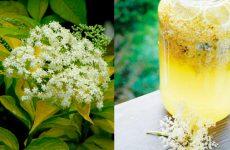 Как приготовить мед из бузины