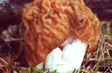 Как приготовить грибы— строчки