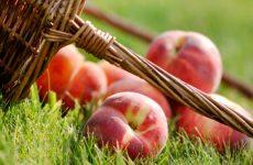 Заготовка персиков на зиму
