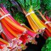 Растение с красивым «именем» Мангольд на зиму