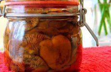 Засолка рыжиков горячим способом на зиму