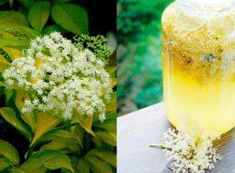 Миниатюра к статье Как приготовить мед из бузины