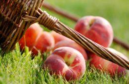 заготовка персиков