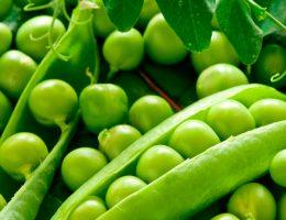 как заморозить зеленый горошек